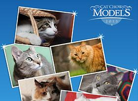 Tu gato vuelve a soñar con ser modelo