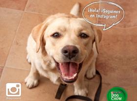 ¡Hola Instagram! Un nuevo perfil de Dog Chow