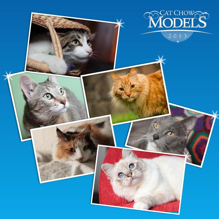 Cat Chow Models y Milo Lockett juntos en el Fan page